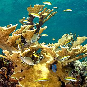 Breakwater Reef at Baha Mar